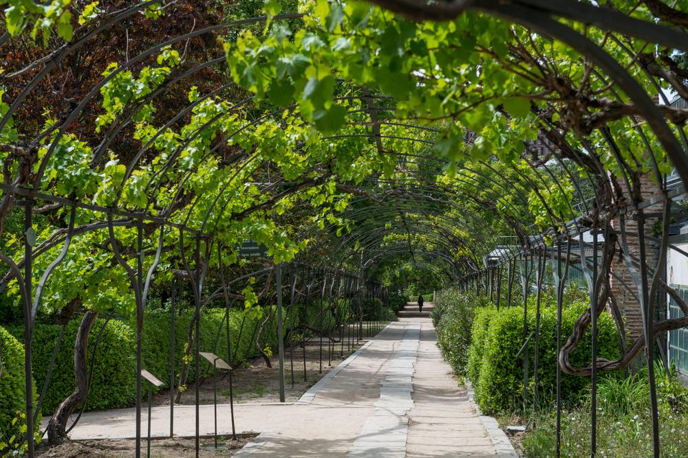 The Real Jardín Botánico, Madrid.