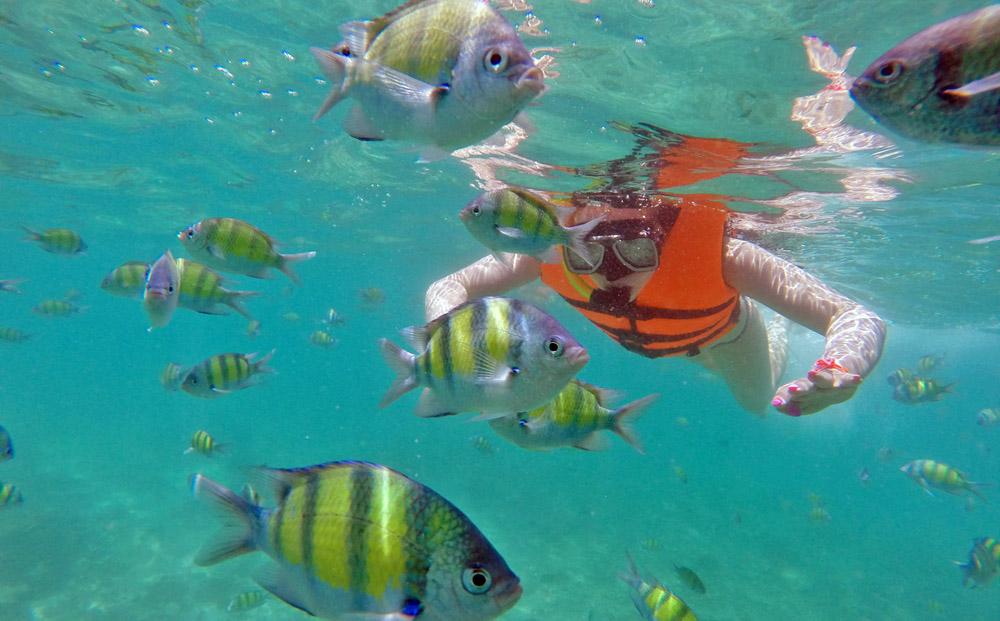 Koh Phi Phi snorkelling. Photo: Bart Juszczak