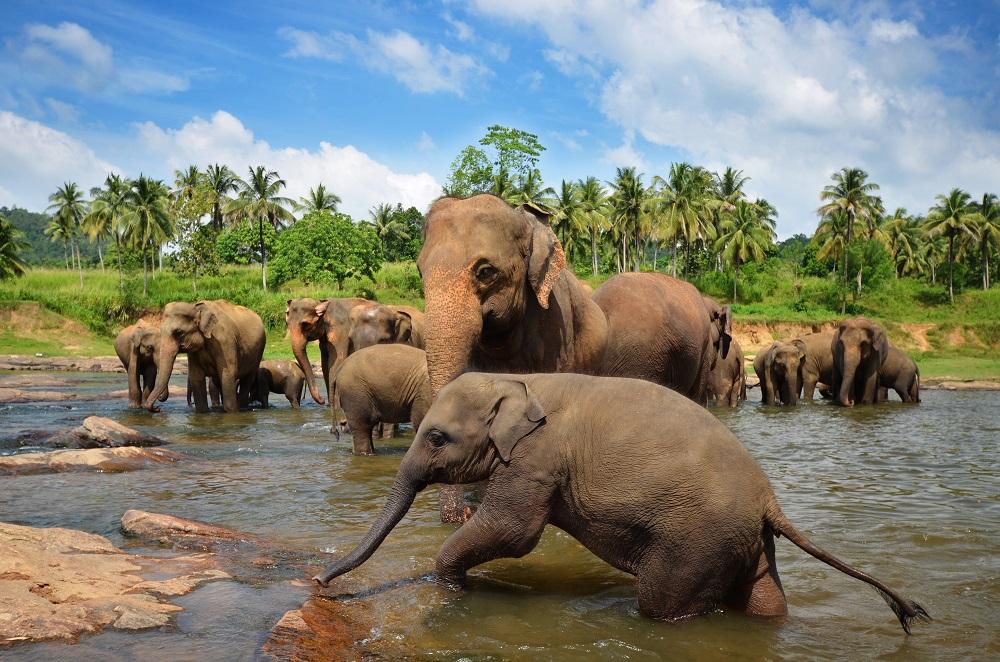 Don't miss Pinnawela Elephant Orphanage. Photo: SurangaSL/Shutterstock