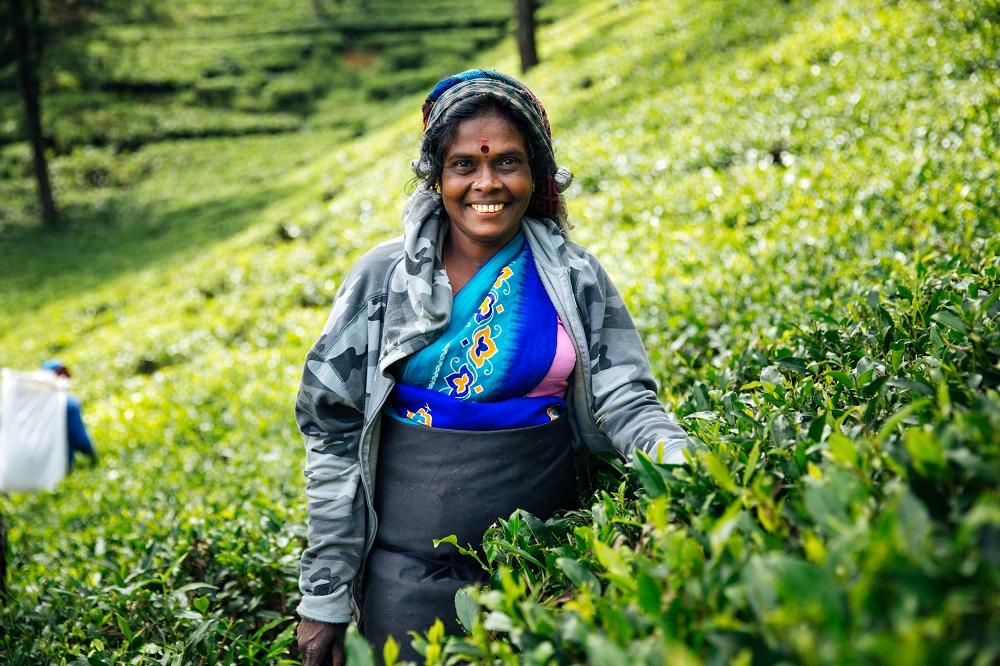 Visit tea plantations in Sri Lanka's Hill Country. Photo: Denis Filatov/Shutterstock