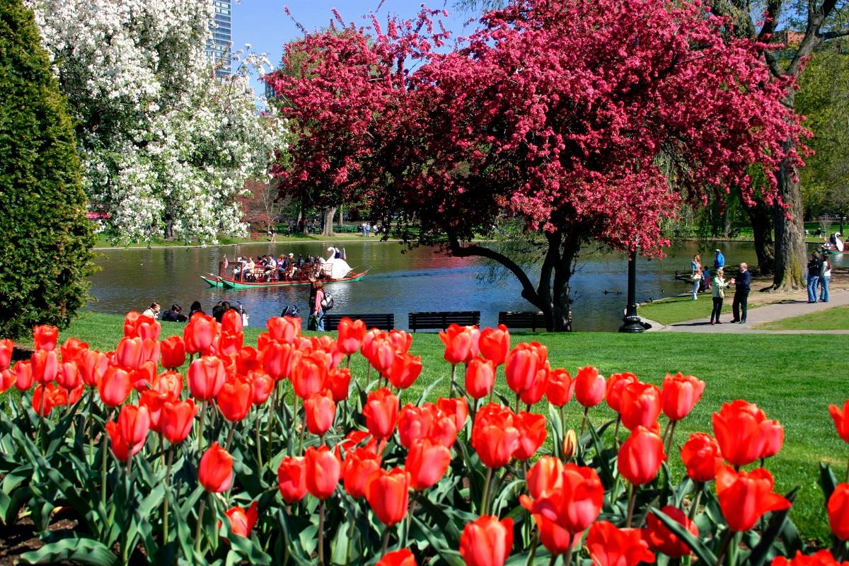 Boston Public Garden. Photo: CO Leong/Shutterstock