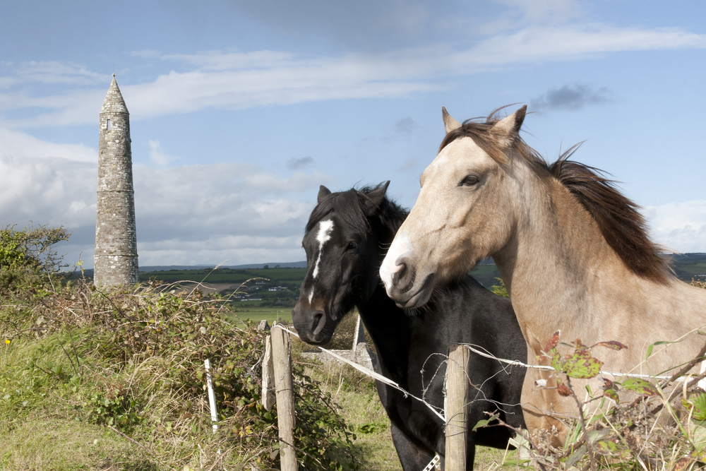 Irish horses by an ancient round tower in the beautiful Ardmore. Photo: Shutterstock