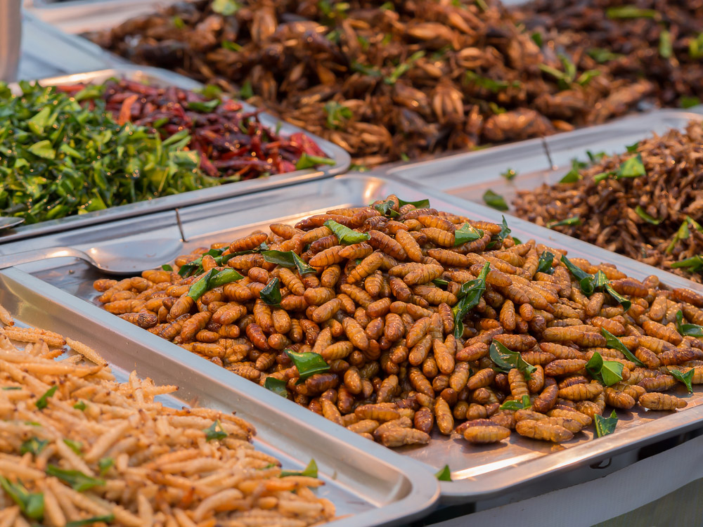 Fried insects. Photo: Shutterstock