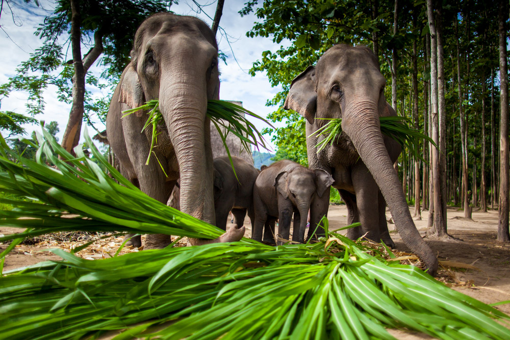 Chiang Dao Elephant Training Centre. Photo: Shutterstock