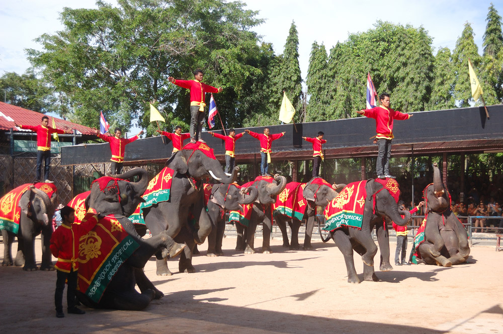The famous elephant show in Nong Nooch tropical garden in Pattaya.