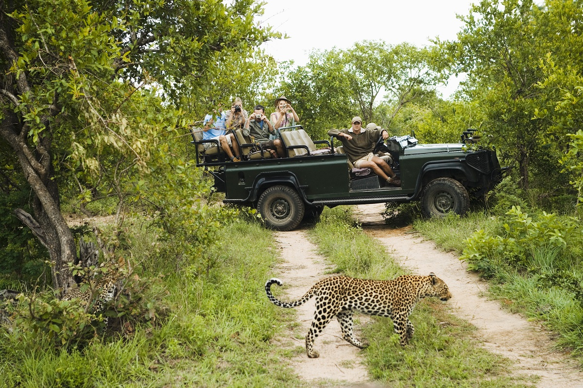 Leopard (Panthera pardus) crossing road with tourists in jeep in background. Photo: bikeriderlondon/Shutterstock