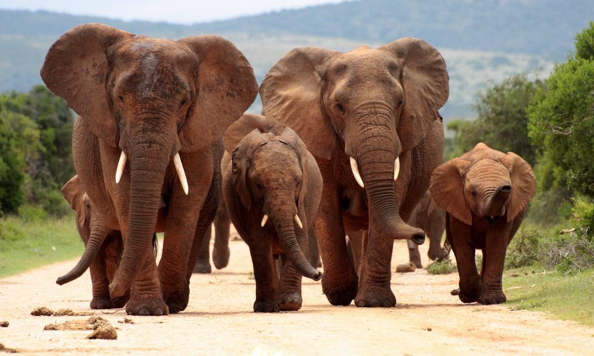 Elephants in Addo Elephant National Park, South Africa. Photo: JONATHAN PLEDGER/Shutterstock