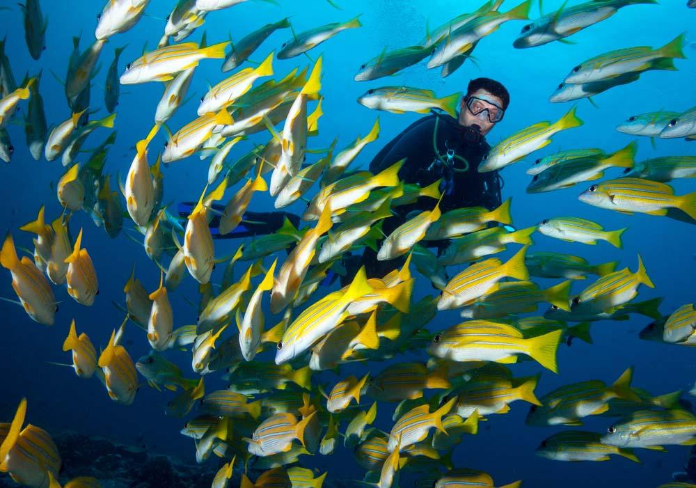 Malaysia marine life