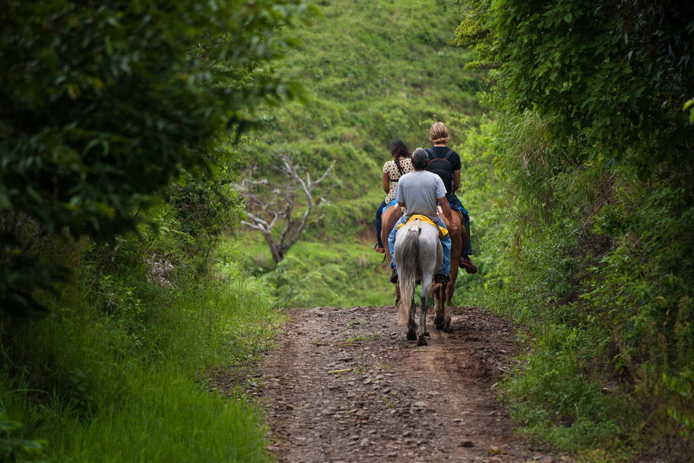 Tourists on horseback in Costa Rican cloud forest. Photo: Shutterstock