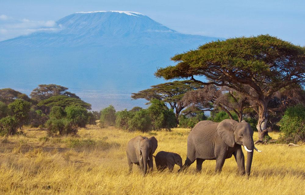 Elephant Family in Tanzania with Kilimanjaro. Photo: Shutterstock