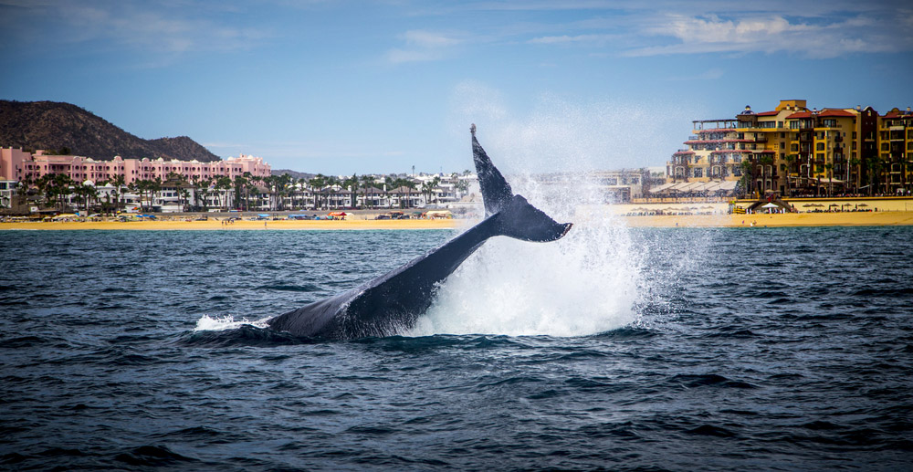Whale Watching Tour in Baja California. Photo: Shutterstock