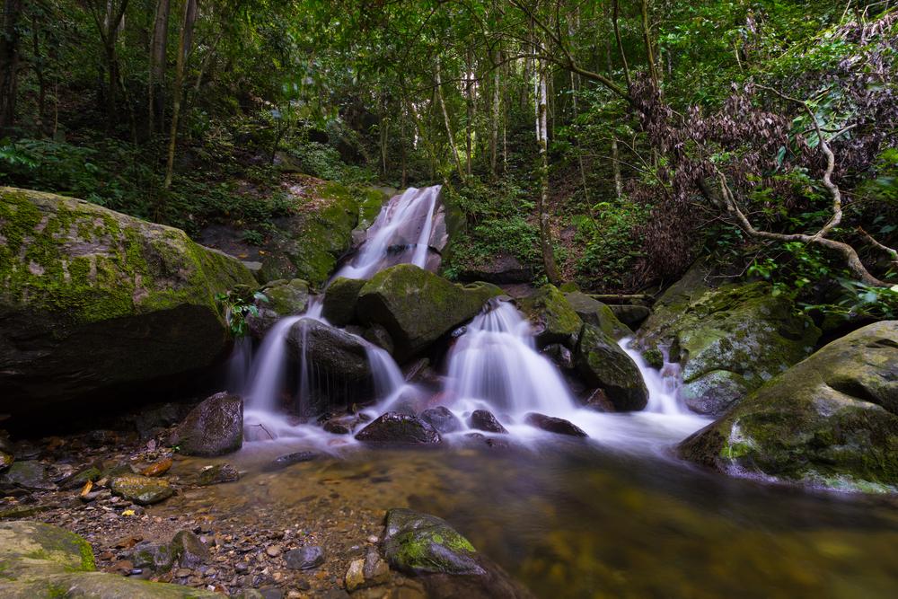 Kinabalu Park. Photo: shaifulzamri/Shutterstock