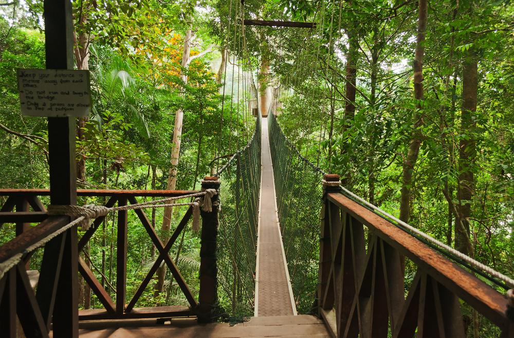 Taman Negara, Pahang. Photo: Elena Mirage/Shutterstock