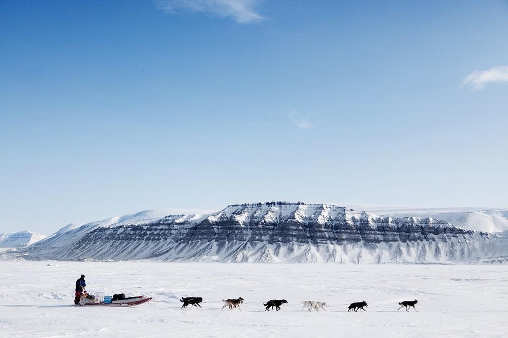 Dogsledding in Alaska. Photo: Tyler Olson/Shutterstock