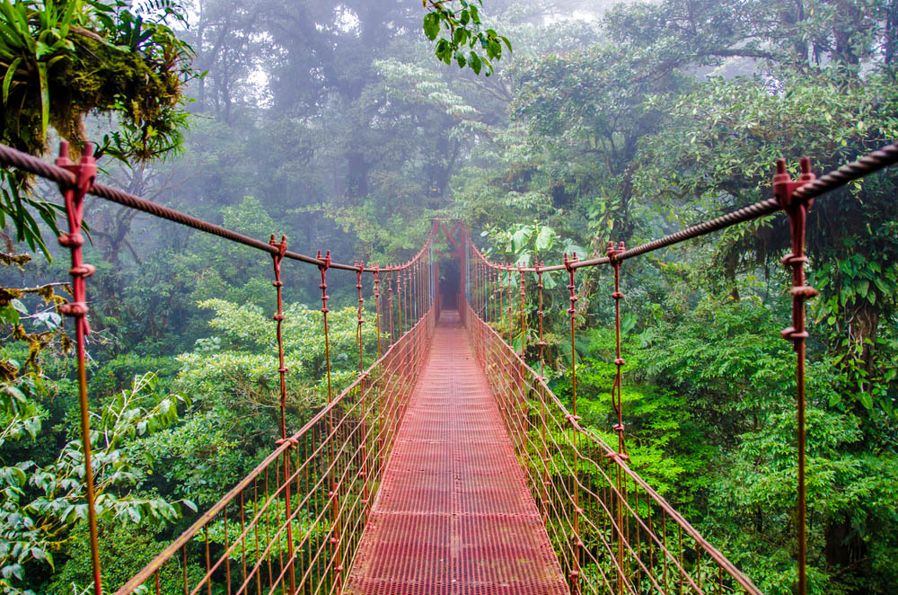 Bridge in Rainforest - Costa Rica - Monteverde. Photo: Shutterstock