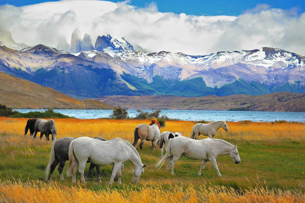 Torres del Paine in Chile. Photo: Shutterstock