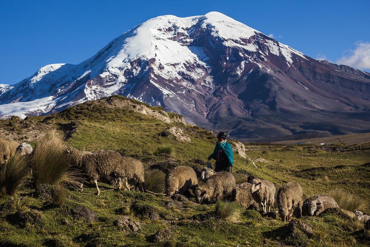 Chimborazo volcano and sheep on the moor, Andes, Ecuador. Photo: Patricio Hidalgo/123RF