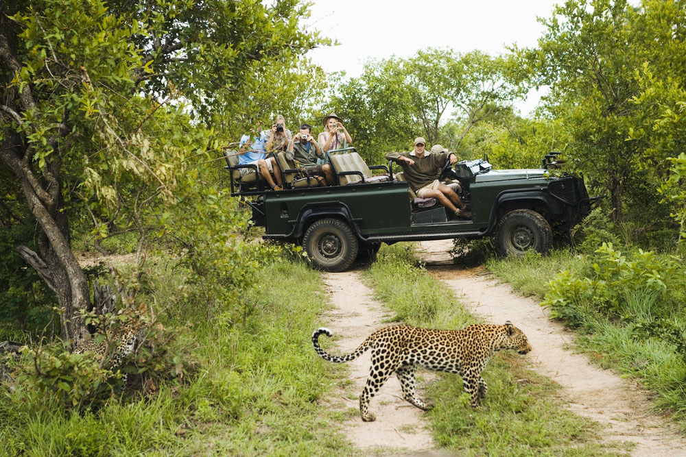 The mighty leopard making his way. Photo: Shutterstock