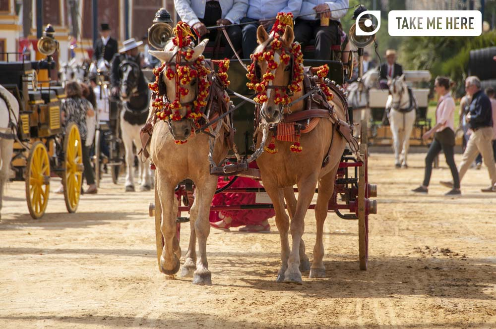 Spanish festivals - 6 unmissable fiestas in Andalucia: horses decked out in festival attire at the horse fair in Jerez de la Frontera