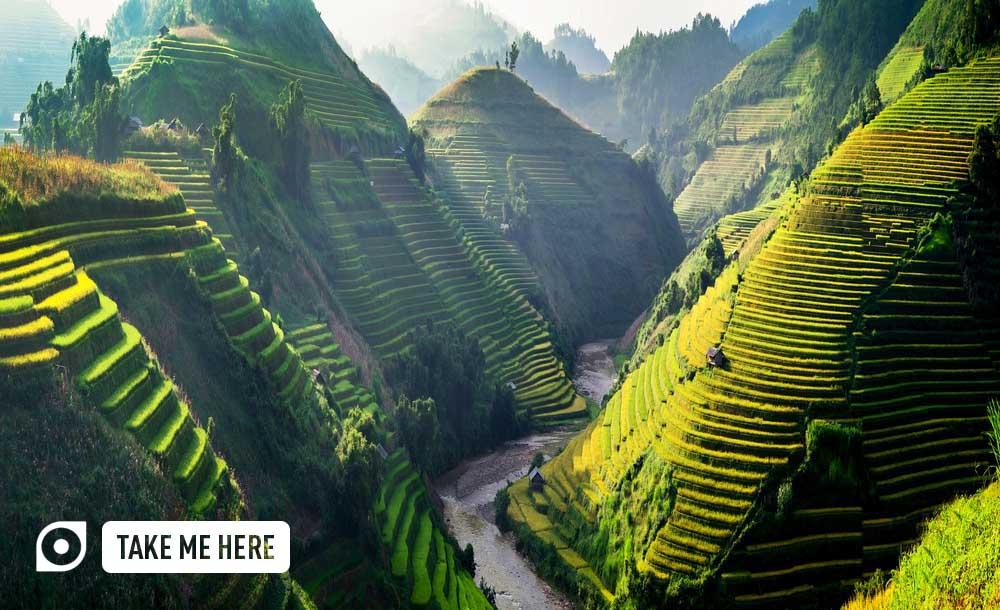Ricefields in the Northwest of Vietnam
