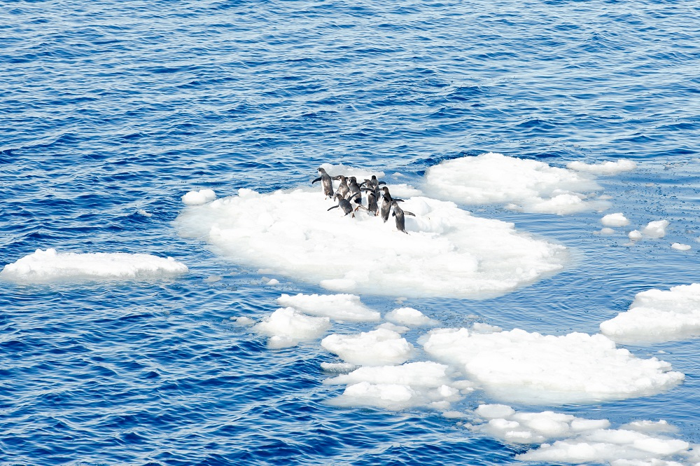 Penguins on the top of the ice piece in Antarctica. Photo: Anton_Ivanov/Shutterstock