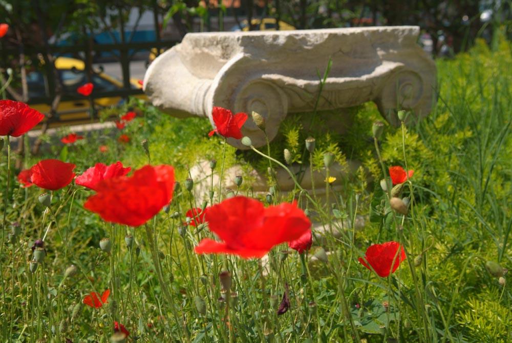 Benaki Museum garden, Athens.