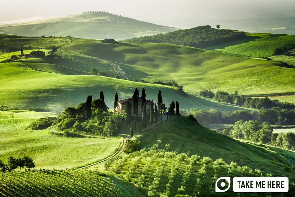 Farm of olive groves and vineyards in Tuscany.