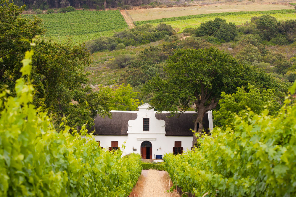 Vineyard with dutch colonial style farm house in South Africa's wine area. Photo: Shutterstock