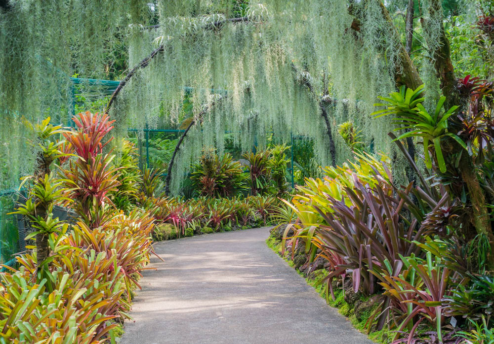 National Orchid garden in Singapore at Botanical Gardens. Photo: Shutterstock