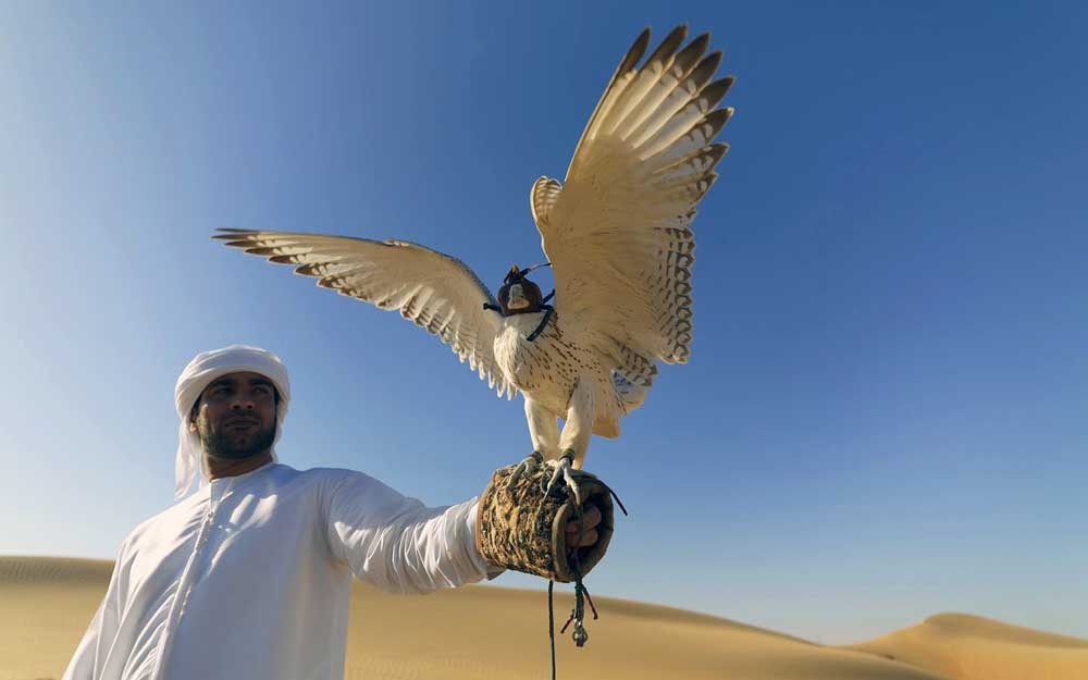 Dubai desert falcon. Photo: Shutterstock