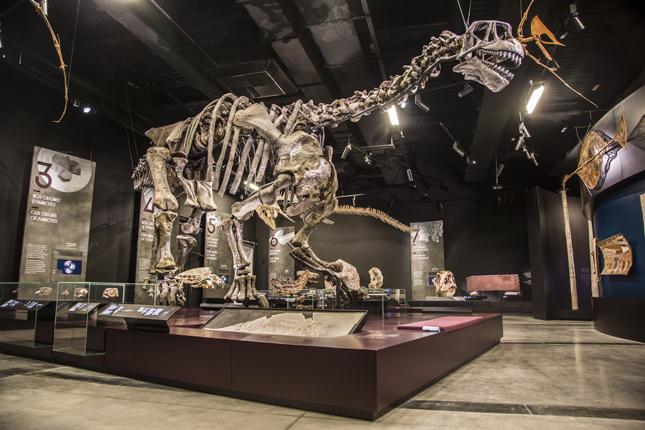 Lyon dinosaur museum