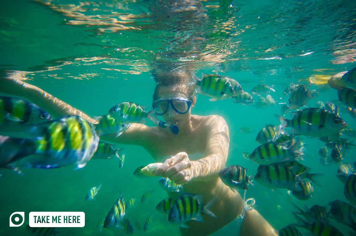 tourists snorkeling with exotic fishes near chicken island krabi thailand photo shutterstock
