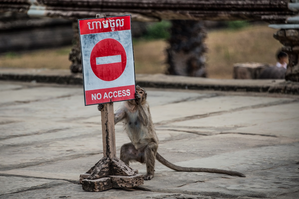 Monkey at Angkor Wat Temple in Cambodia. Photo: DC_Aperture/Shutterstock