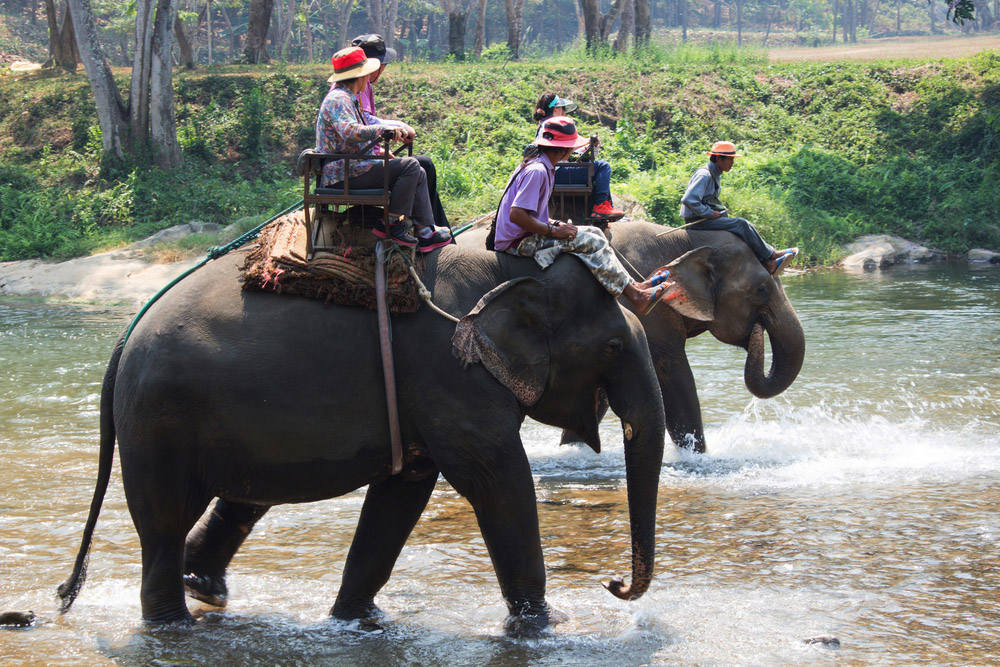 Elephant trekking through the jungle in northern Thailand. Photo: Shutterstock