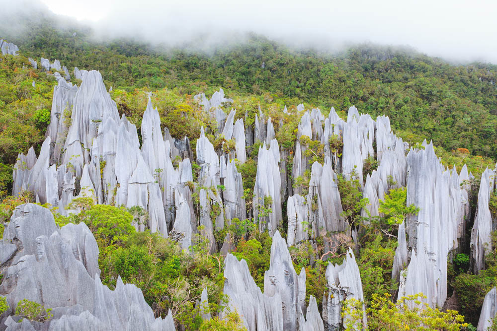 Limestone pinnacles at Gunung Mulu National Park. Photo: Shutterstock