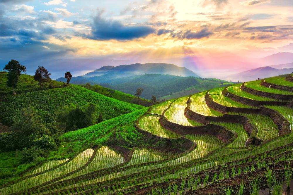 Terraced rice paddies, Chiang Mai