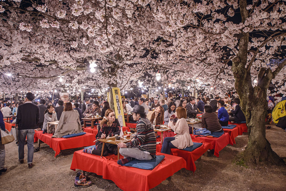 Crowds enjoy the spring cherry blossoms by partaking in seasonal nighttime Hanami festivals in Maruyama Park. Photo: Shutterstock