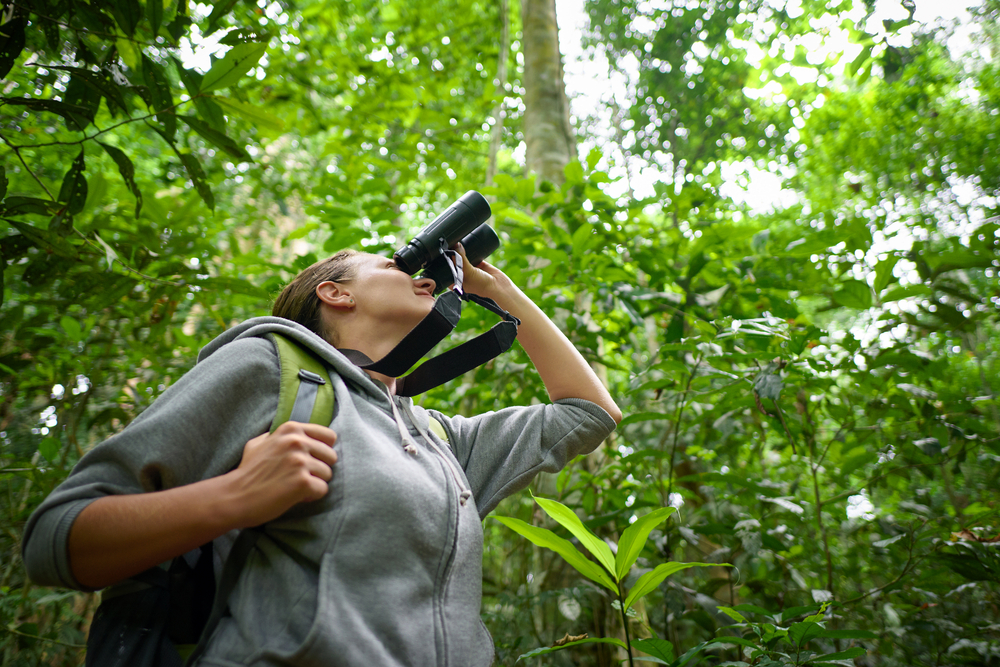 Bird watching tours. Photo: Shutterstock