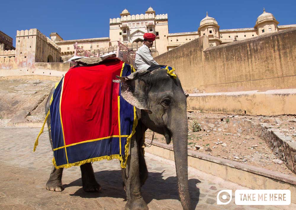 Elephant driver at the Amber Fort, Jaipur