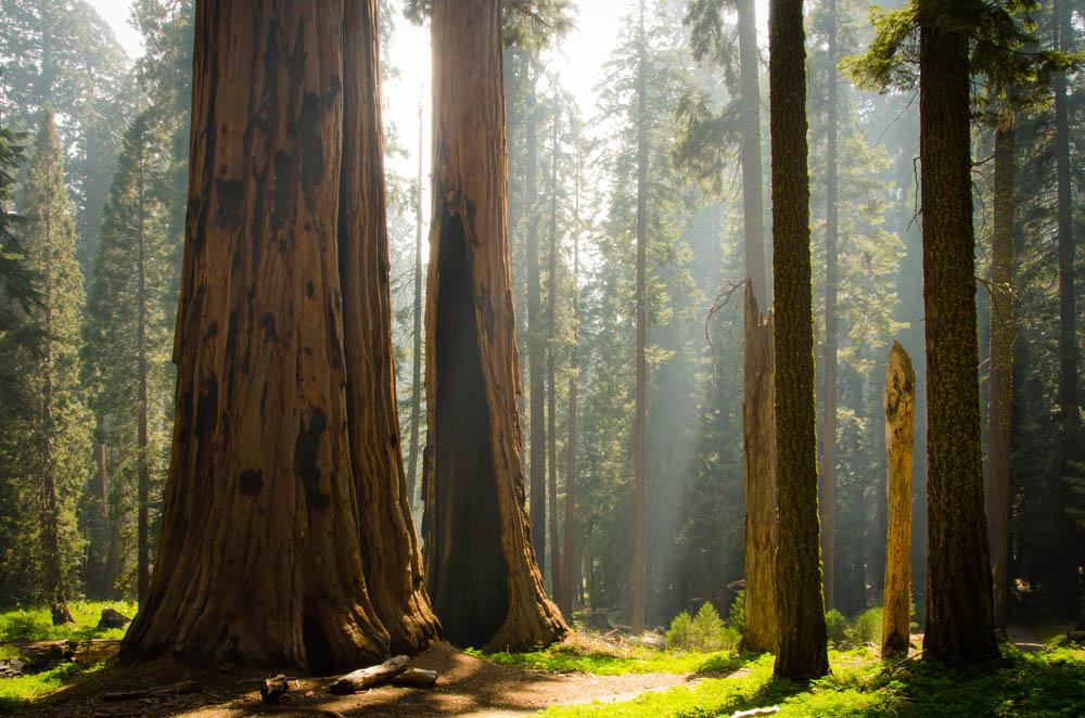 Kings Canyon & Sequoia National Park, California.