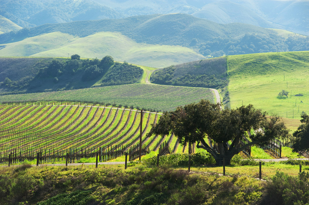 The world's best half marathons – Paso Robles vineyard valley through which the Wine Country Runs Half Marathon passes.