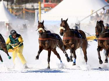 Horse ski joring. Photo: Shutterstock