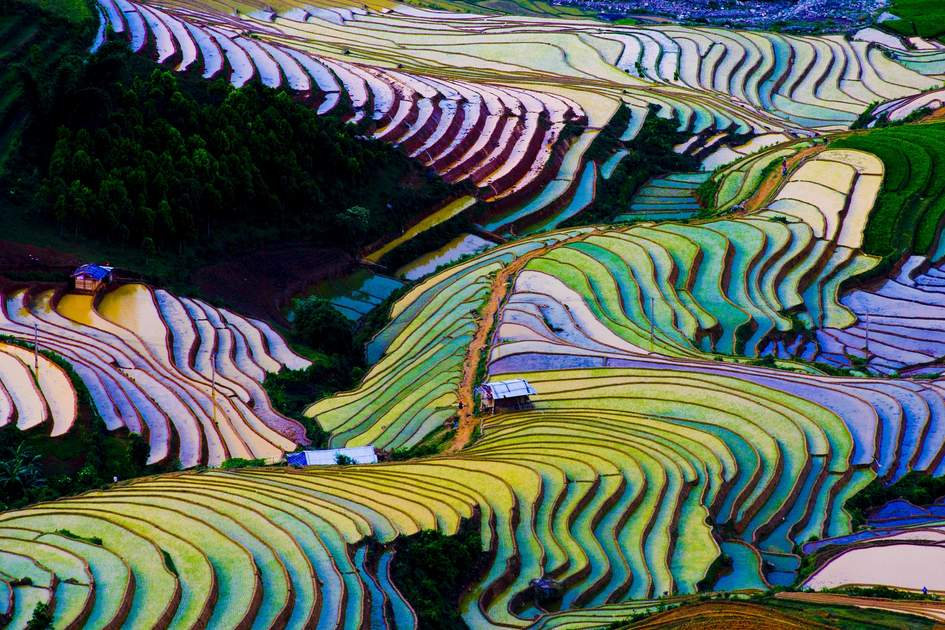 Terraced rice fields in Mu Cang Chai, Vietnam