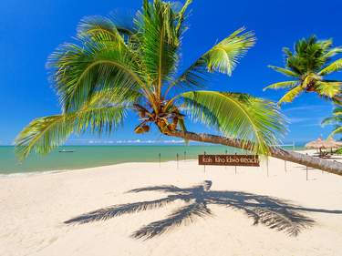Tropical palm tree on the beach of Koh Kho Khao island, Thailand
