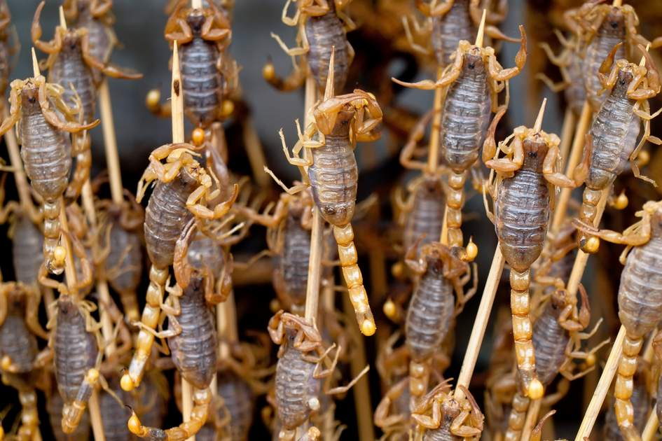 Roasted fried insects and scorpions and bugs as snack street food in China, Beijing