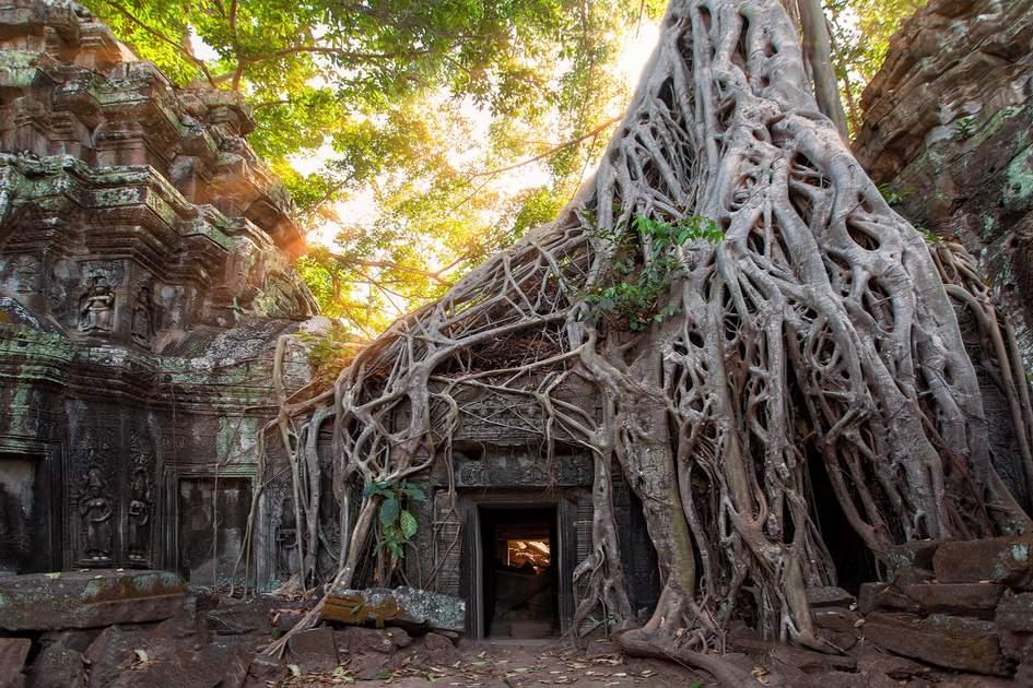 Ancient Khmer temple ruins amid tree roots at Angkor Wat, Cambodia. Photo: Frolova_Elena/Shutterstock