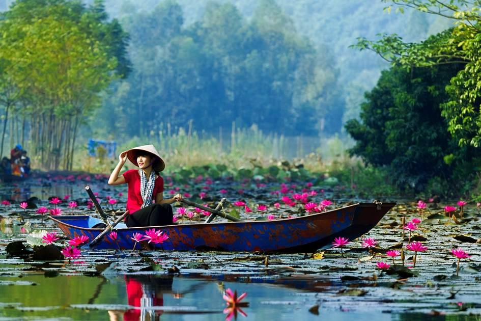 Rowing amongst the lily ponds, Hanoi region, Vietnam.