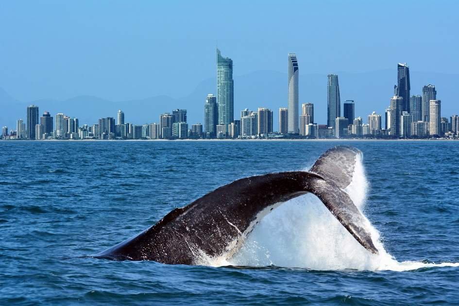 Having a whale of a time along the Gold Coast, Queensland, Australia