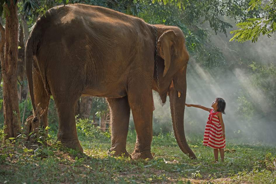 Child and elephant, Surin, Thailand