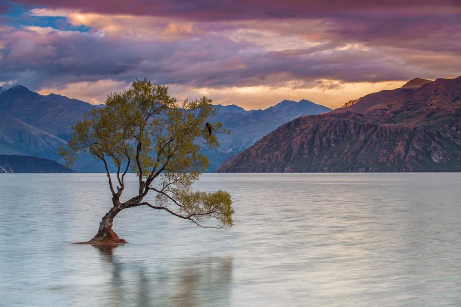 Lone tree on Lake Wanaka, New Zealand
